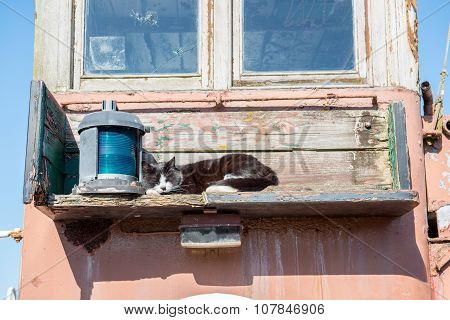 Sleeping cat and lamp