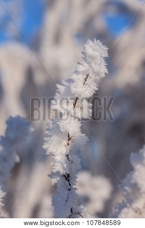 Winter Plant Closeup