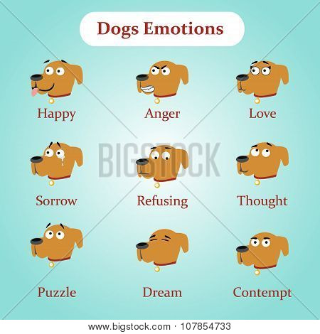 Dog emotions: happy, anger, love and other
