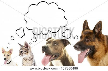 Dogs and cat with empty cloud bubble above heads, isolated on white