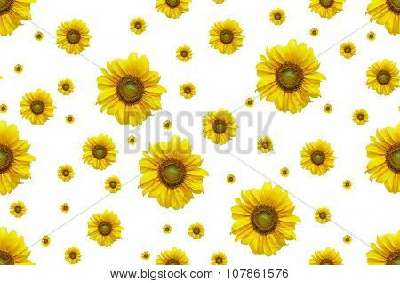 Seamless Background With Flower Sunflower.