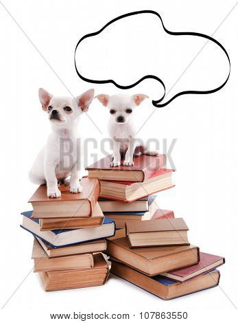 Dogs  sitting on books with empty cloud bubble above her head, isolated on white