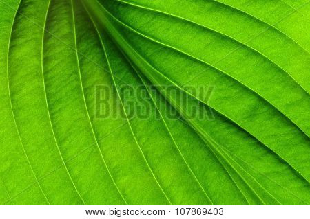 close up of green leaf texture