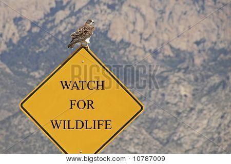 Watch for Wildlife