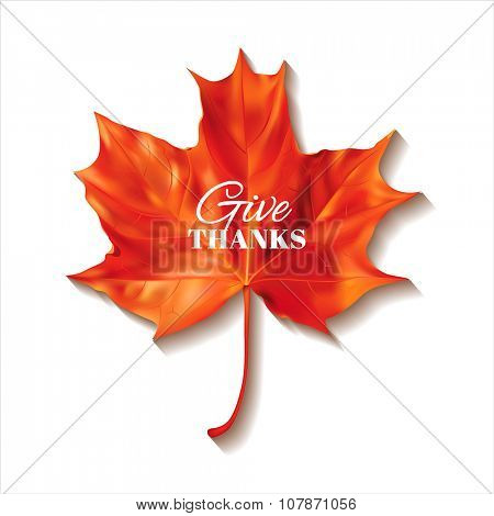 Thanksgiving Day background with red maple leaf. Vector illustration.