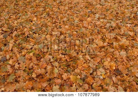 Leaves, So Many Leaves
