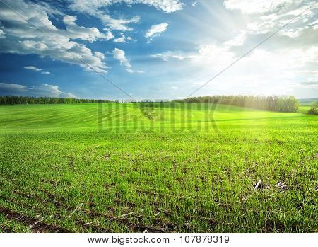Field of bright green grass