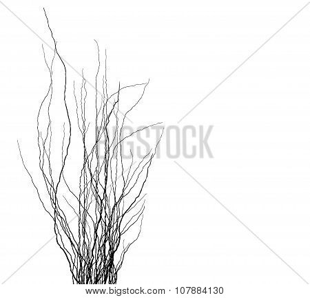 Tree Branches Silhouette In Black Over White