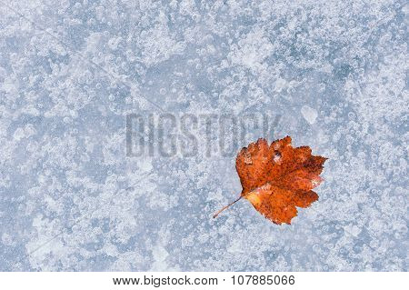 Autumn Red Leaf On The Ice.