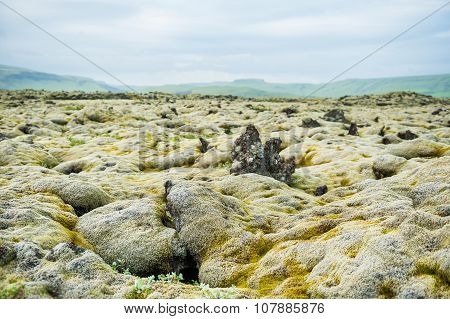 Green Moss On Volcanic Lava Field, Iceland.