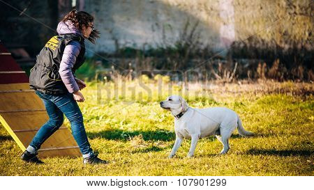 The woman is engaged in labrador dog training.