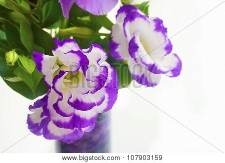 purple blooming flowers