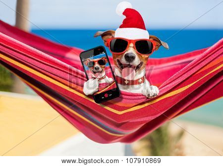 Dog On Hammock At Christmas