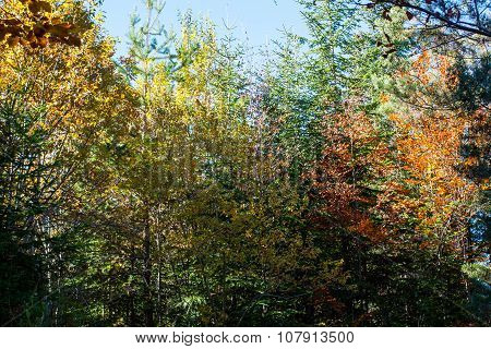 Beautiful autumn yellow, orange, green trees in forest lightened by sun