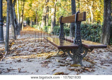 lonely bench in the autumn garden in the Retiro Park in Madrid, Spain