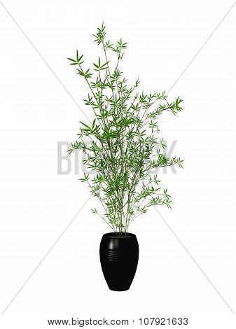 Potted Plant Bamboo