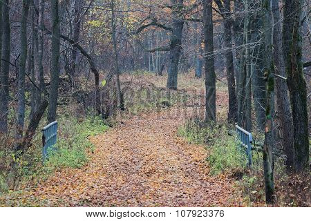 Forest in autumn.