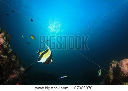 Underwater coral reef with fish (Moorish Idols)