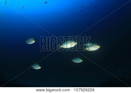 Fish underwater in sea