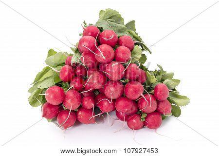 Garden radishes
