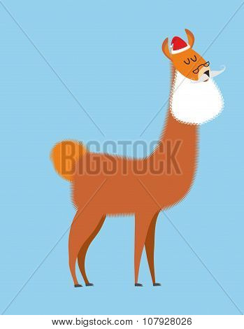 Alpaca Lama Santa Claus. Wild Animal With Beard And Moustache. Christmas Beast.