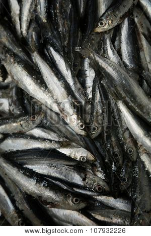 Fresh sardines in a market for sale