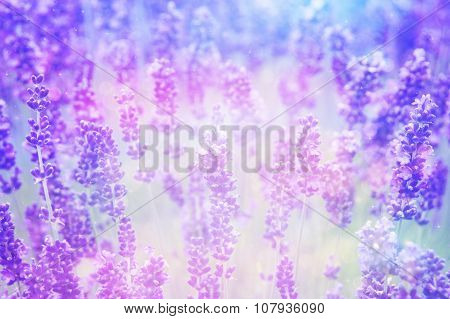 Dreamy Beautiful Lavender Background With Bokeh Lights
