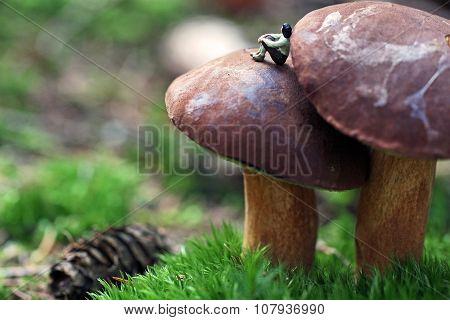 rest on a mushroom