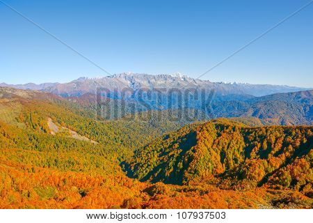 View Of The Autumn Mountain Forests.