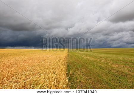 Yellow and green field during a thunderstorm