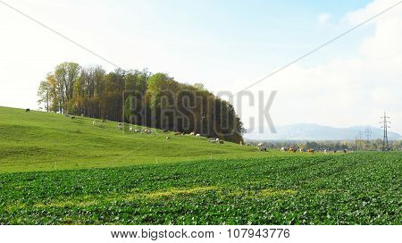 pasture and field
