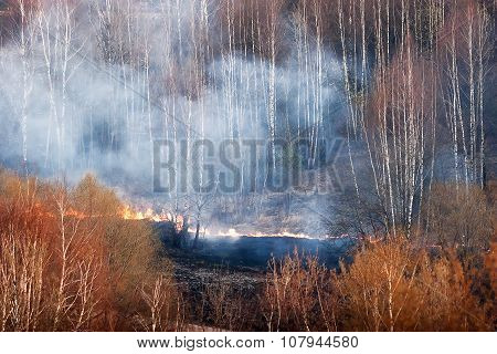 Wildfire In Park. Forest Fire In Autumn Day.