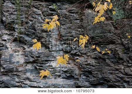 Yellow Leaves against Stone Wall