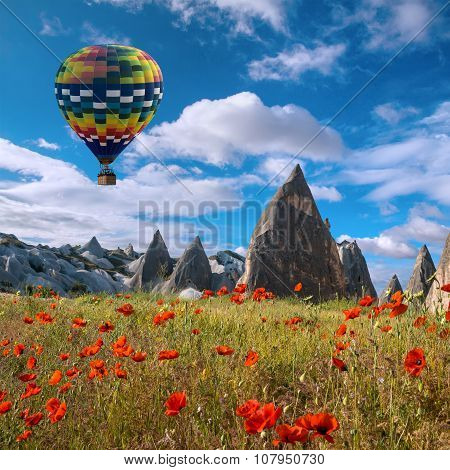 Air Balloon Over Poppies Field Cappadocia, Turkey