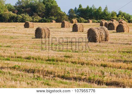 Straw Haystacks On The Grain Field