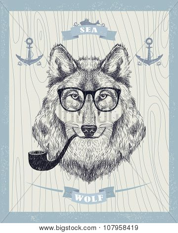 Sea wolf vector card, smoking hipster wolf with sunglasses and tobacco pipe.