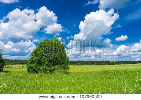 Growth Season Fresh Landscape