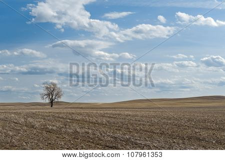 Wheat Field With One Bare Tree
