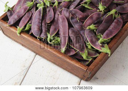 purple mange tout peas