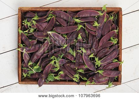purple mange tout vegetables