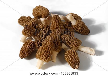 Appetizing edible mushroom. Morel