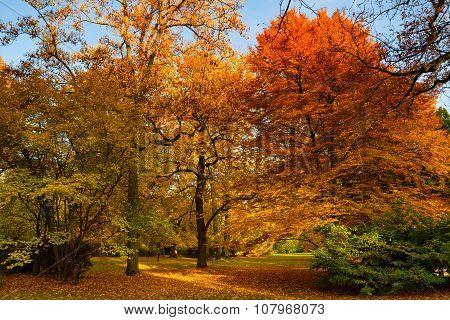 Park Of Bad Homburg In Autumn