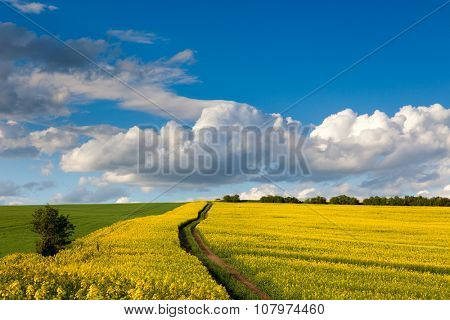 Spring fresh landscape of colorful fields, blue sky and ground road
