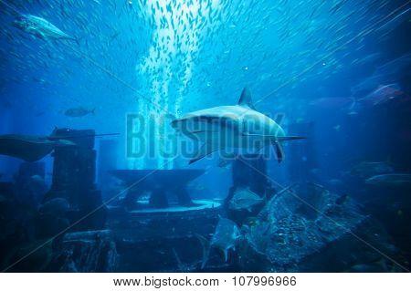 Aquatic animals in huge aquarium.