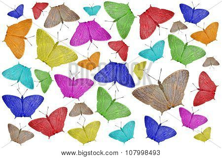 Exotic Color Butterfly As Nature Background