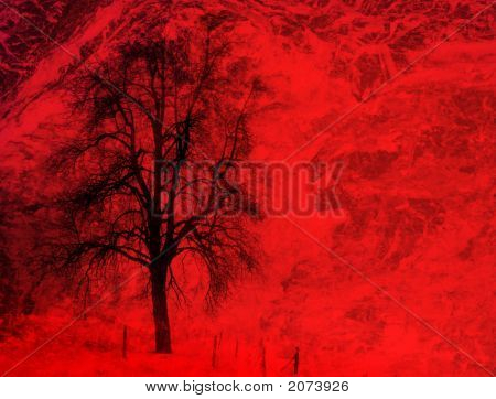 Winter Tree In Red