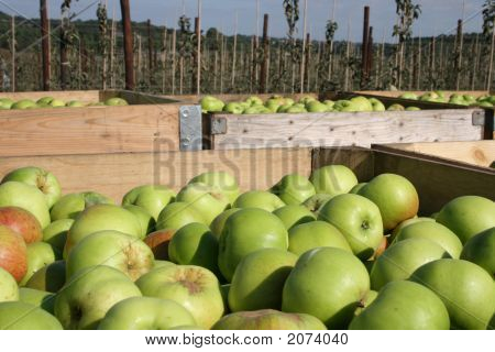 Kentish Apples Boxed Up