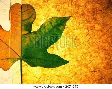 Leaf On Paper