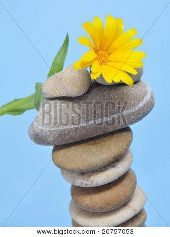 a pile of zen stones and a yellow daisy on a blue background