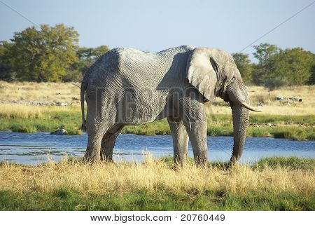 Elephant standing at waterhole